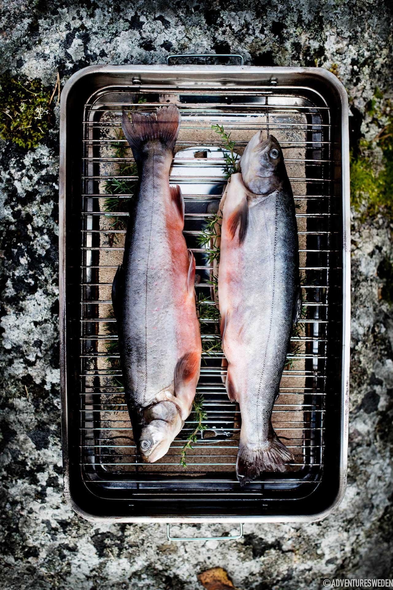 Fish | Photo: Sandra Lee Pettersson