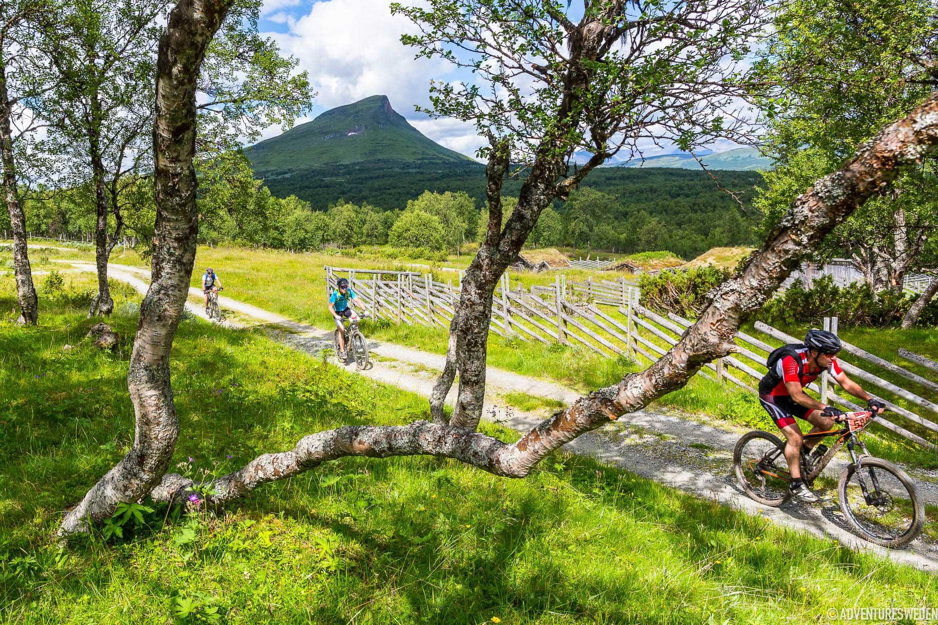 Mountainbike i Funäsfjällen | Foto: Anders Robertsson