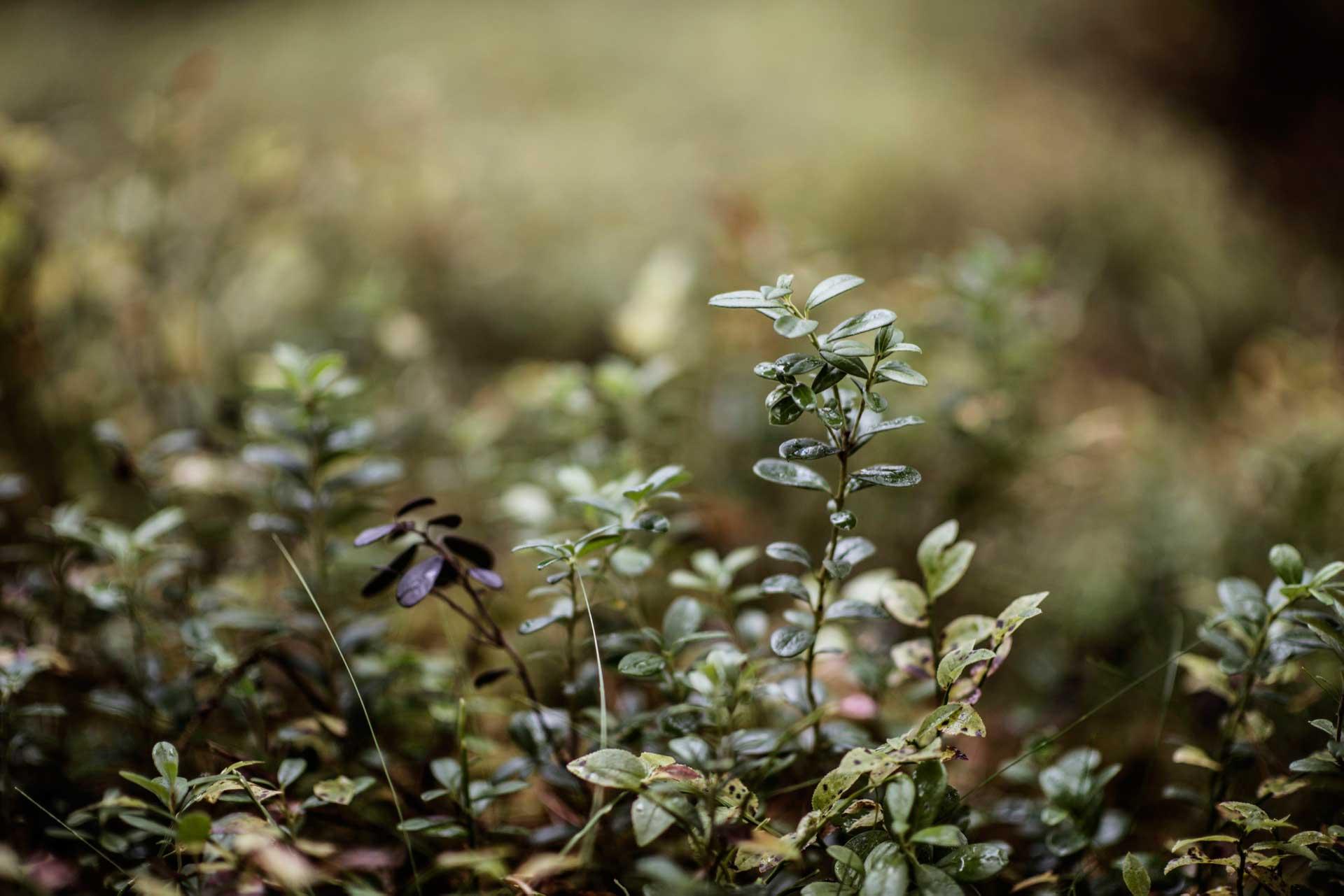 Forest | Photo: Sandra Lee Pettersson