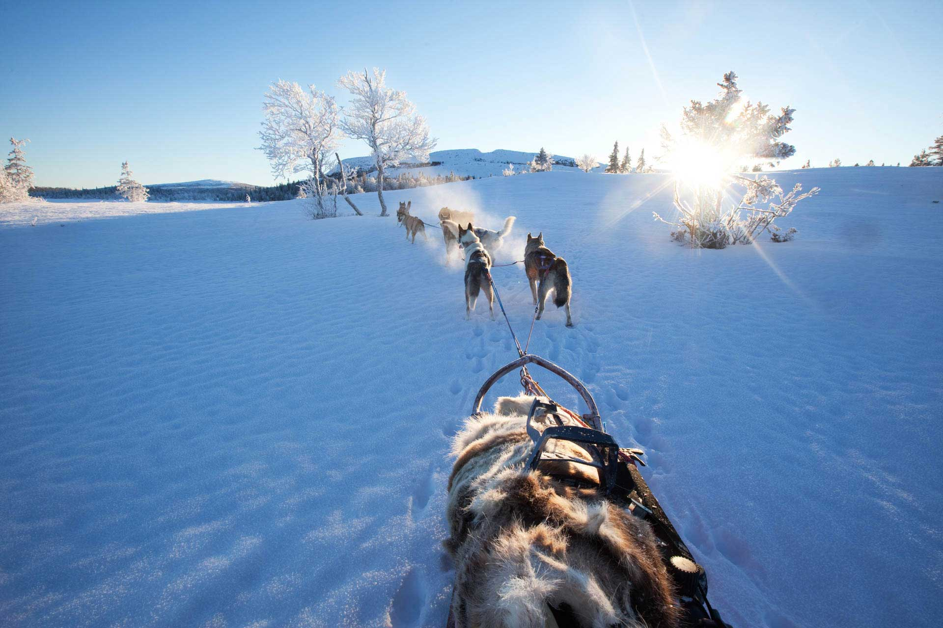 Dog sledding Sweden | Photo: Nicklas Blom