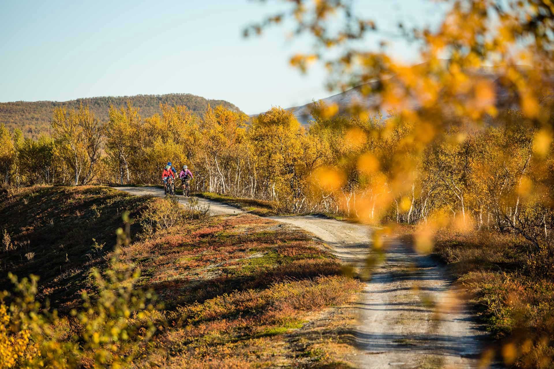 Biking in Funäsfjällen | Photo: Anette Andersson