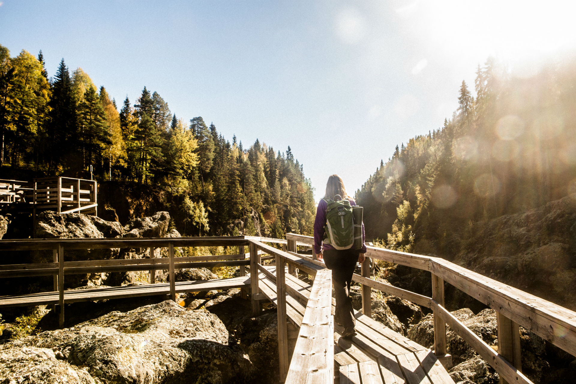 Dead falls in Ragunda | Photo: Niclas Blom