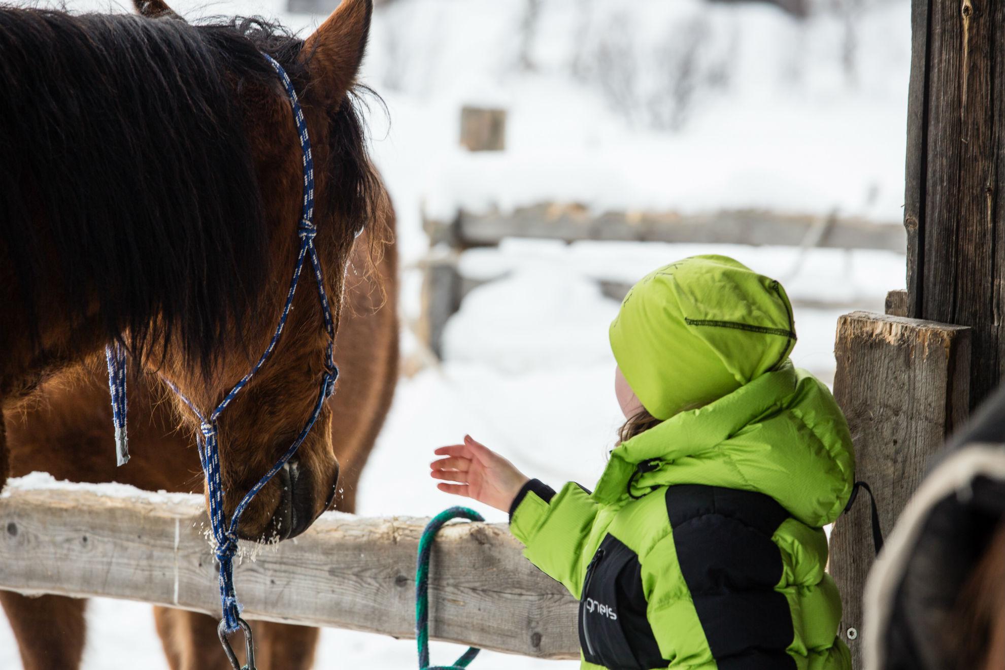 Petting_horses_trumvallen_Vemdalen_anette_andersson