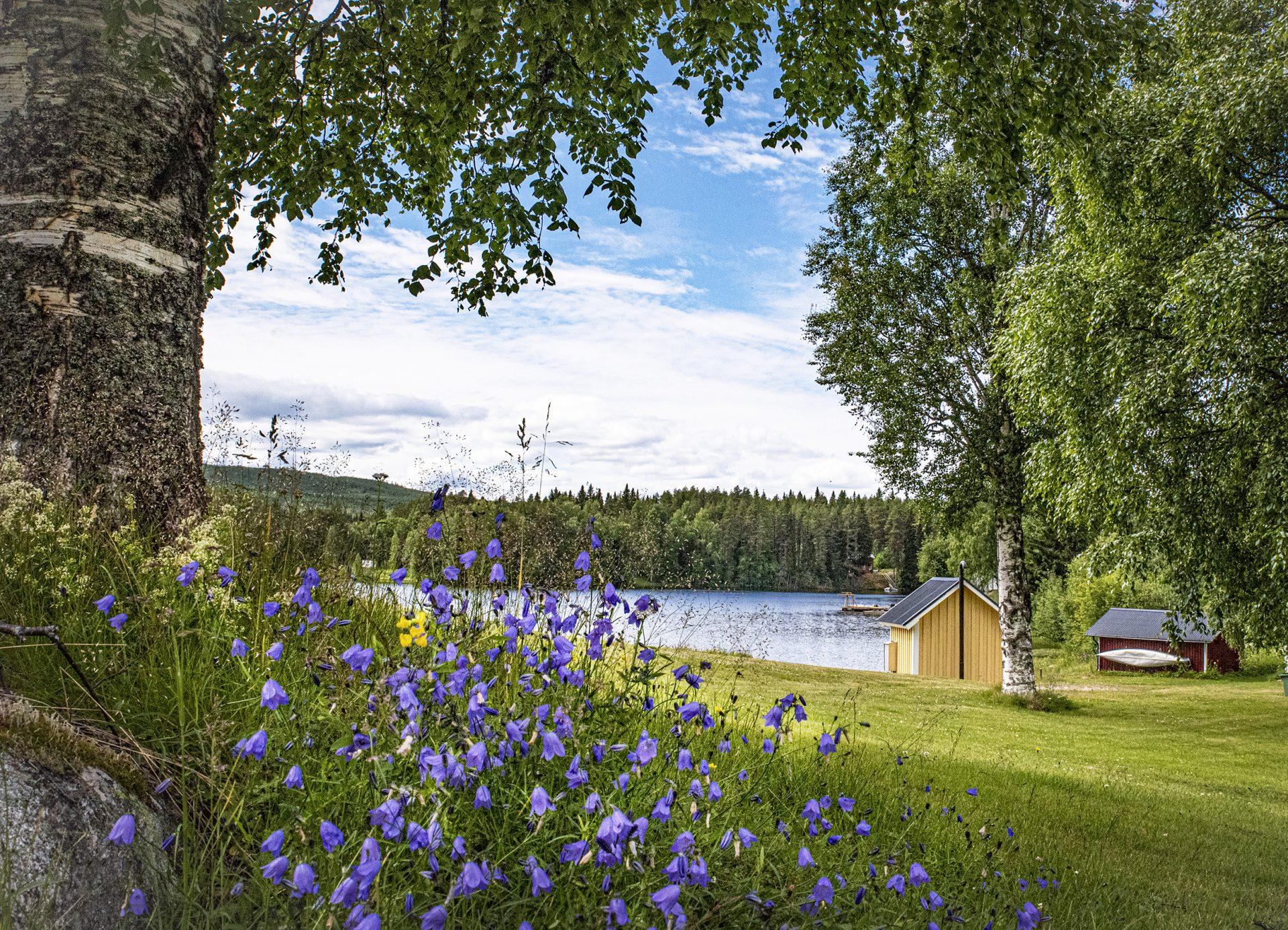Bluebells Hoting Camping Erika Enequist