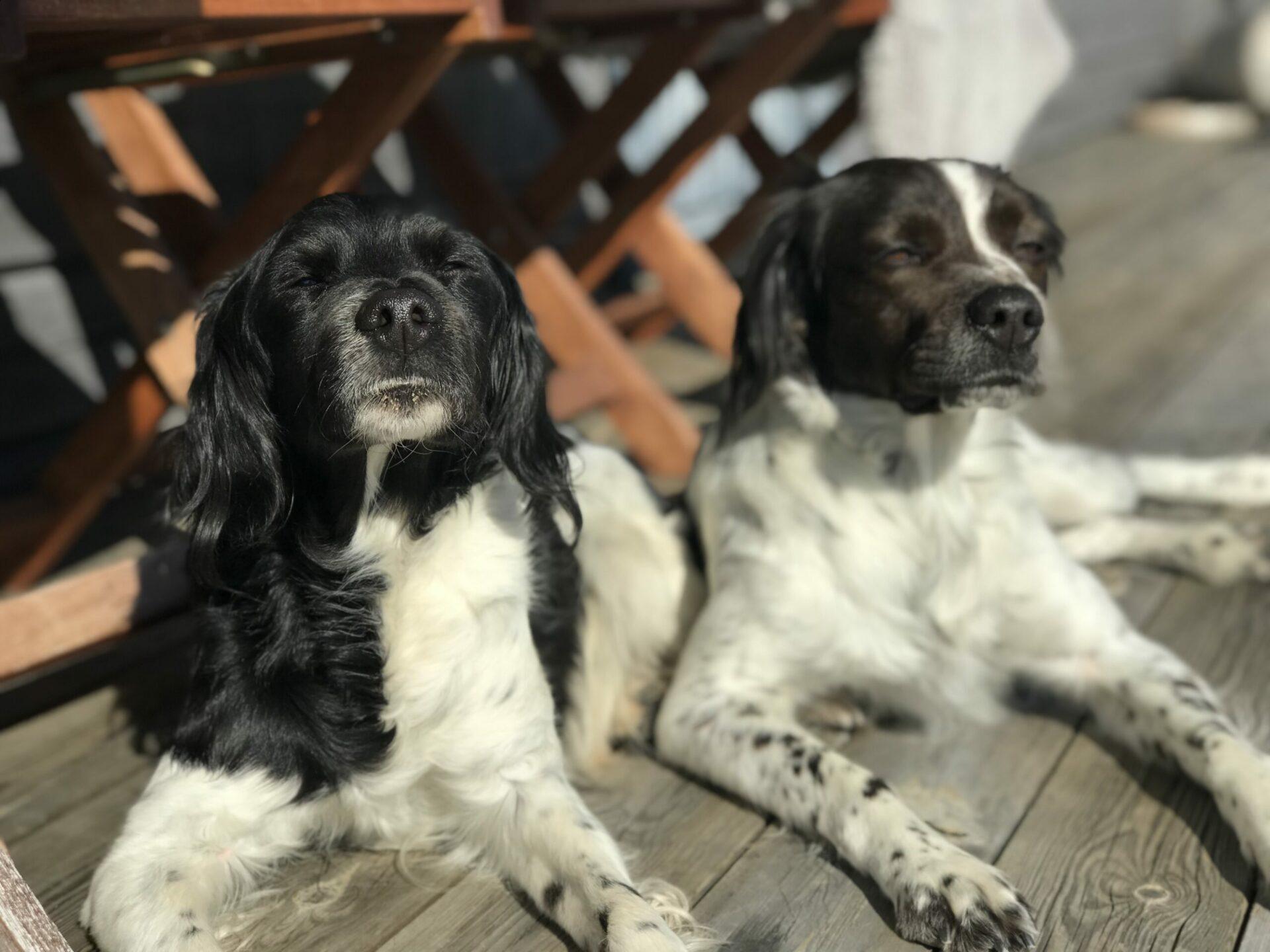 Hundar som njuter Anne Adsten